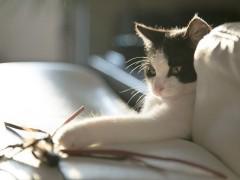 Dobra kuweta dla kota
