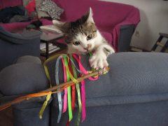 Jak zapobiegać niszczeniu mebli przez kota?