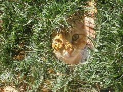 Kot ze schroniska – dorosły czy kocię?